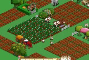 farmville_6-300x202