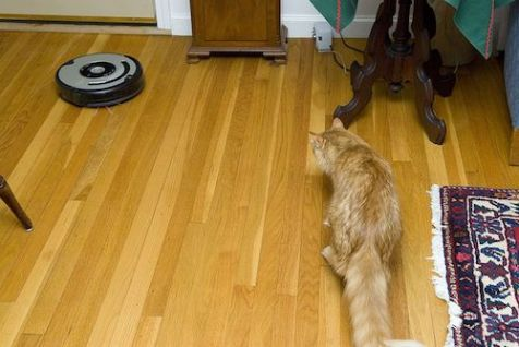 800px-gillie_trying_to_avoid_the_roomba_21666828511