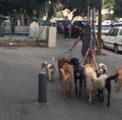 Tel Aviv Dog Walker